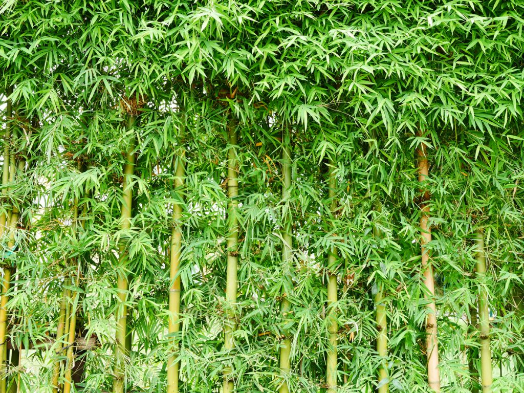 Bamboo - Material, Fence, Abstract, Backdrop, green wall leaves